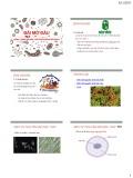 Bài giảng Vi sinh vật - Bài mở đầu