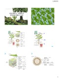 Bài giảng Sinh lý tế bào thực vật - Chương 1: Sinh lý tế bào thực vật