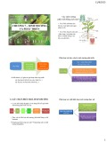 Bài giảng Sinh lý tế bào thực vật - Chương 7: Sinh trưởng và phát triển