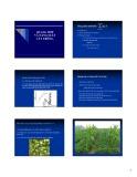 Bài giảng Sinh lý thực vật - Bài 19: Quang hợp và năng suất cây trồng