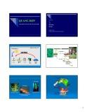 Bài giảng Sinh lý thực vật - Bài 15: Giới thiệu và tổ chức bộ máy quang hợp