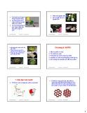 Bài giảng Hóa sinh thực phẩm: Chương 6 - ThS. Phạm Hồng Hiếu (2017)