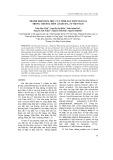 Thành phần hóa học của tinh dầu một số loài trong chi hoa tiên ở Việt Nam