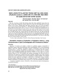 Định lượng phyllanthin trong diệp hạ châu đắng (Phyllanthus amarus L.) bằng sắc ký lỏng siêu hiệu năng sử dụng detector huỳnh quang