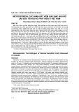 Microsporidia: Tác nhân gây viêm giác mạc nhu mô lần đầu tiên được phát hiện ở Việt Nam