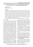 Ứng dụng kỹ thuật nuôi cấy in vitro trong nhân giống lan Hoàng thảo kèn (Dendrobium lituiflorum Lịndley)