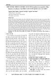 Một số đặc điểm Lâm học loài Ươi (Scaphium macrapodum (Miq.) Beumée ẽ K.Heyne) tại phá Nam vườn quốc gia Cát Tiên