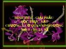 Bài giảng Hình thái giải phẫu học thực vật - Chương 3: Cơ quan sinh dưỡng (Rễ)