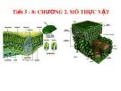 Bài giảng Hình thái giải phẫu học thực vật - Chương 2: Mô thực vật