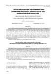 Phân lập và định danh chủng xạ khuẩn có khả năng đối kháng với vi khuẩn Xanthomonas oryzae pv. oryzae gây bệnh bạc lá lúa