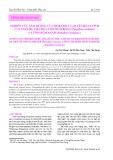 Nghiên cứu ảnh hưởng của nhiệt độ và pH lên hoạt tính của enzyme tiêu hóa tôm hùm bông (Panulirus ornatus) và tôm hùm xanh (Panulirus homarus)