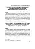 Xác định loài sán lá gan lớn gây bệnh ở bò và ở người khu vực miền Bắc (Việt Nam) bằng hình thái học và sinh học phân tử