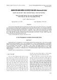 Nghiên cứu nhân giống in vitro cây hoa hiên (Hemerocallis fulva)