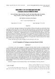 Nhân giống in vitro Lan Thanh đạm Tuyết Ngọc (Coelogyne mooreana sander ex rolfe)