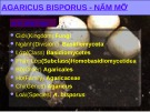 Bài giảng Sinh học và kỹ thuật trồng nấm - Bài: Nấm mỡ
