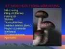 Bài giảng Sinh học và kỹ thuật trồng nấm - Bài: Kỹ thuật nuôi trồng nấm hương