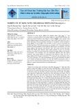 Nghiên cứu sử dụng nước thải biogas trồng bắp (Zea mays L.)