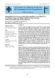 Ảnh hưởng của tỷ lệ C/N lên tăng trưởng, tỷ lệ sống của ấu trùng và hậu ấu trùng tôm sú (Penaeus monodon) ương nuôi trong hệ thống biofloc