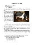 Bảng giảng Chăn nuôi heo: Chương 1 - Công tác giống