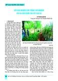 Kết quả nghiên cứu trồng thử nghiệm cây ba kích dưới tán cây cao su