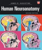 Ebook Human neuroanatomy (2nd edition): Part 1