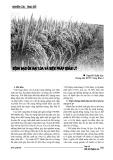 Bệnh đạo ôn hại lúa và biện pháp quản lý