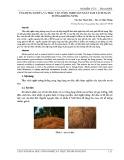 Ứng dụng xơ dừa và trấu vào công nghệ sản xuất tấm vách ngăn tường không nung
