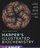 Ebook Harper's illustrated biochemistry (31/E): Part 2