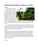 Một số triệu chứng thiếu dinh dưỡng trên cây hồ tiêu