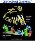 Bài giảng Sinh học phân tử: Chương 3