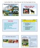 Bài giảng Chăn nuôi trâu bò: Chương 1 - Học viện Nông nghiệp Việt Nam (2017)
