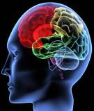 Bài giảng Sinh lý học - Bài 17: Sinh lý hệ thần kinh vận động