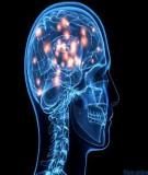 Bài giảng Sinh lý học - Bài 19: Một số chức năng cấp cao của hệ thần kinh