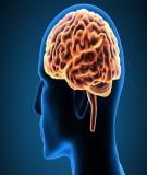 Bài giảng Sinh lý học - Bài 18: Sinh lý hệ thần kinh tự chủ
