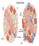 Bài giảng Sinh lý học - Bài 2: Đại cương về cơ thể sống và hằng tính nội môi