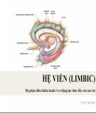 Bài giảng Hệ viền (Limbic) - Bộ phận điều khiển hành vi và động lực thúc đẩy của não bộ