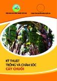 kỹ thuật trồng và chăm sóc cây chuối