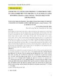 Ảnh hưởng của hàm lượng protein và lipid trong thức ăn công nghiệp đến tăng trưởng và tỷ lệ sống của tôm hùm bông (Panulirus ornatus Fabricius, 1798) giai đoạn nuôi