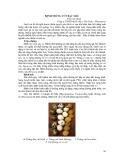 Bệnh trứng cút bạc màu