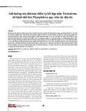 Ảnh hưởng của chitosan chiếu xạ kết hợp nấm Trichoderma tới bệnh chết héo Phytophthora spp. trên cây dâu tây