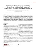 Ảnh hưởng của phương thức gieo và mật độ trồng đến chỉ tiêu sinh trưởng, phát triển và năng suất cây Diêm mạch (Chenopodium quinoa Willd.) tại Quảng Trị