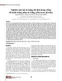 Nghiên cứu tái sử dụng bã thải dong riềng để nuôi trồng nấm sò trắng (Pleurotus florida)