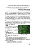 Khả năng xử lý các tác nhân gây phú dưỡng môi trường nước của bèo tai chuột (salvinia cucullata)