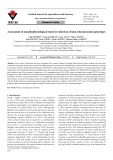 Assessment of morphophysiological traits for selection of heat-tolerant potato genotypes