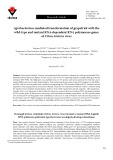 Agrobacterium-mediated transformation of grapefruit with the wild-type and mutant RNA-dependent RNA polymerase genes of Citrus tristeza virus