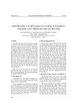 """Nguồn gốc và tên gọi của tầng """"cuội kết"""" tại khu vực đỉnh núi Ba Vì, Hà Nội"""
