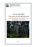 Sổ tay nhận biết các loài cây gỗ thường gặp kiểu rừng khô thưa cây họ dầu ưu thế (rừng khộp) ở Tây Nguyên