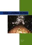 Sản lượng rừng - Bảo Huy