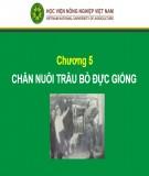 Bài giảng Chương 5: Chăn nuôi trâu bò đực giống