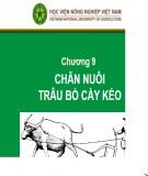 Bài giảng Chương 9: Chăn nuôi trâu bò cày kéo